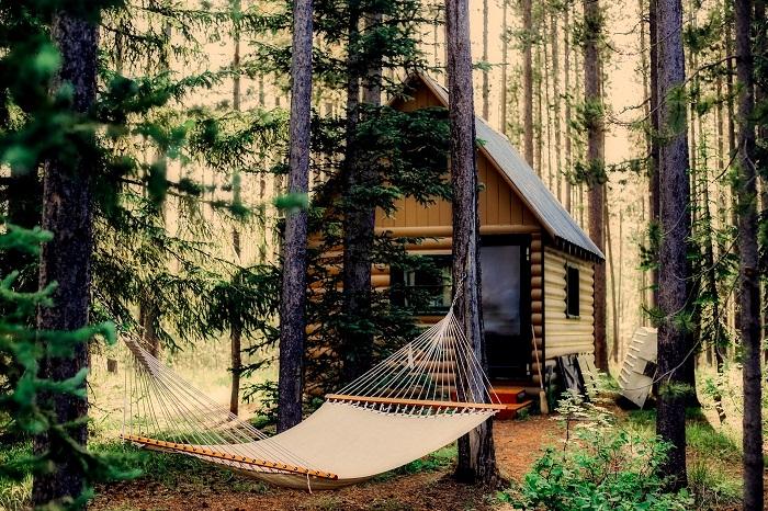 Drevodom v lese