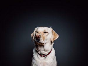 Obojky pre psov a ich výber
